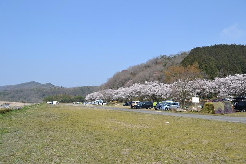 桜の季節のどき土器ひろば