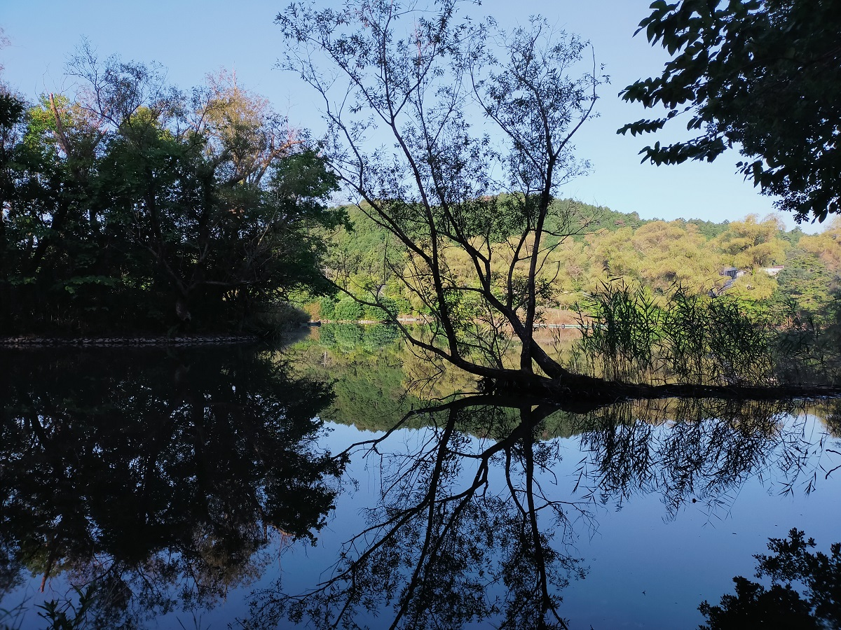 日が昇るにつれてさらに三島池が美しく・・
